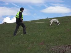 c. perros rastro